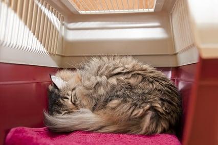 Catsleepingincrate