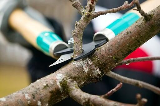 treetrimshutterstock_138951152
