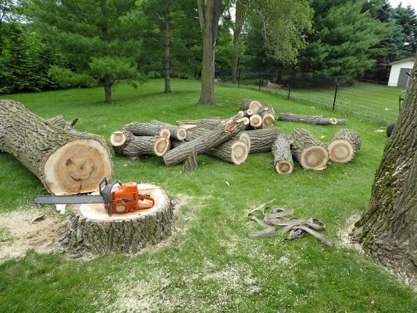 wood pile left from cut tree