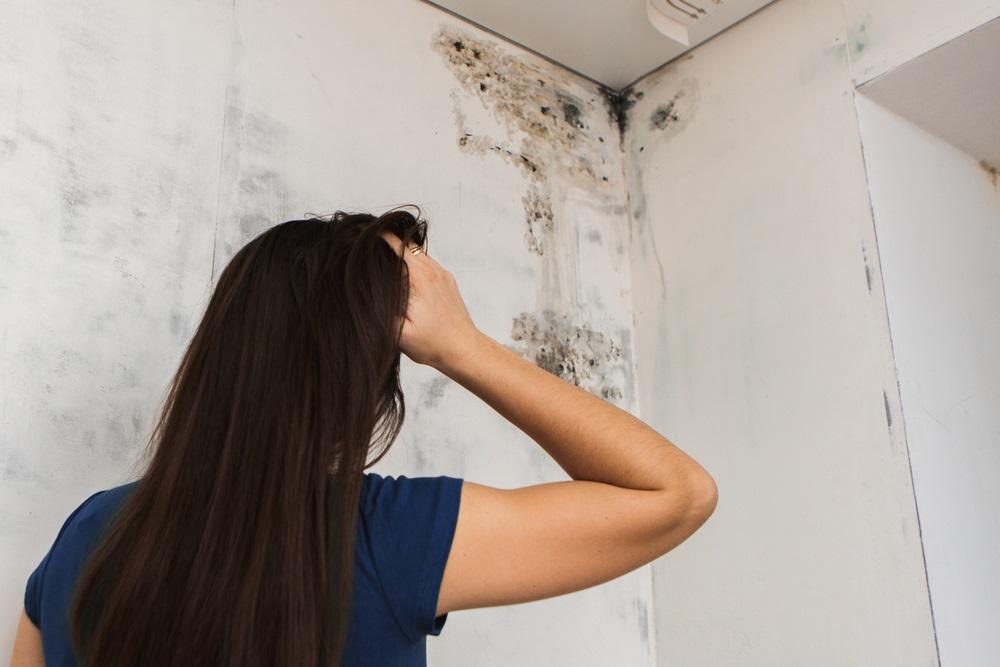 Got Mold? We've Got a Simple Solution